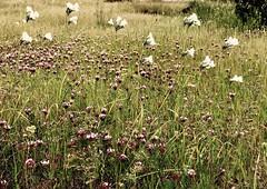 Wild flowers (Eugene Kogan) Tags: iphone columbiarivergorge washington coyotewall flowers wildflowers