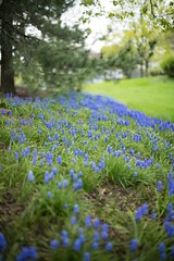 Blue Flowers (Dayane S.T.) Tags: love blue flower nature grass spring organic