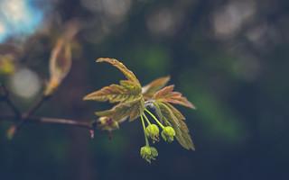 Nature-0824-2