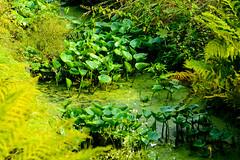 Nature. (ost_jean) Tags: nikon d5200 900 mm f28 nature plants green colors ostjean