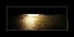 P2270422 (cowsandgirl71) Tags: panasonic fz200 france monochrome lumière lumix landscape ombres