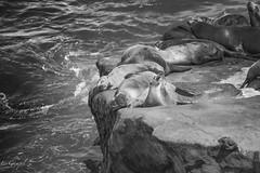Sleepy Seals at the Cove.jpg (Lgampel) Tags: night boattours nature water reflections city sonya6500 landscapes rocks california ocean travel sandiego scenery seals sky seascape longexposure lajolla colors torreypines
