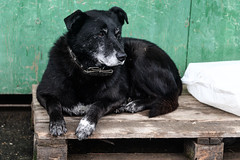 Кожуховский приют (JewishBetelgeuse) Tags: dog shelter homeless takeadog