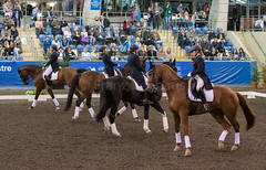 17429_Sydney_CDI_Quadrilles_0013.jpg (FranzVenhaus) Tags: athletes dressage australia equestrian riders horses ponies rug siec nsw sydney newsouthwales aus