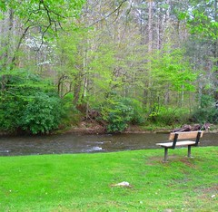 A Peaceful Day From Roan Mountain Tennessee ....    HBM (~ Cindy~) Tags: peaceful hbm green spring early dogwoods bench river doe tennessee mountain roan 2017 april