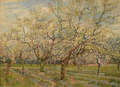 Almond Orchards (MCS@flickr) Tags: amsterdam vincent almond orchard van gogh