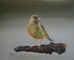 Groenling I (Ed Schaap) Tags: sky green bird art yellow fauna forest ed european air finch oil greenfinch oilpainting groninger schaap carduelis passerine chloris groenling groenvink edschaap