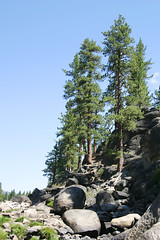 FRS100467 (Chance Agrella) Tags: california trees tree water pine river bed rocks stream feather riverbed gorge wilderness rugged streambed