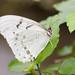 Stratford Butterfly Farm_9