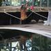 orangutan - toronto zoo - 16