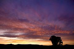 4th of July Sunrise, Gunnison, CO (BDFri2012) Tags: color tree silhouette clouds sunrise colorado 4thofjuly gunnisonco