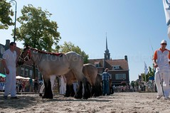 DSC_2324 (Ton van der Weerden) Tags: horses horse dutch de cheval belgian nederlands belges draft chevaux belgisch trait ijzendijke trekpaard trekpaarden