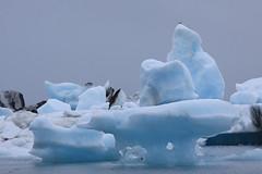 IMG_3378 (Glassholic) Tags: ice iceland july glacier iceberg juillet jokulsarlon glace vatnajokull islande ovs eyjafjallajokull 2013