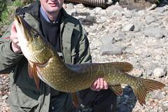 Side Shout (salmoferox) Tags: fish scotland fishing loch pike predator cr pikefishing catchandrelease catchrelease pikeflyfishing