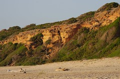fossil dunes and Maquis shrubland (hiroy71) Tags: sea panorama tree landscapes mare colore pentax luce k5 scivu smcpentaxda55300mmf458ed