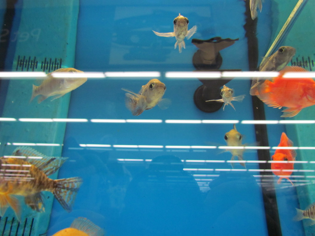 The world 39 s best photos of fish and walmart flickr hive mind for Fish farm near me