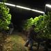 Jordan Harvest 2013 Night Harvest.jpg