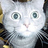 Ur Kitteh Overlords icon