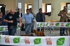 DSC_5910 (Large) (Renato De Iuliis) Tags: mostra chieti canina internazionale 2013 exp