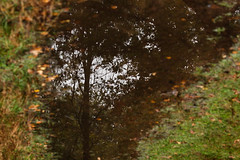 regenplas (beta karel) Tags: autumn sky brown reflection tree green nature water netherlands forest puddle groen herfst bos footpath bruin drie 2013 betakarel