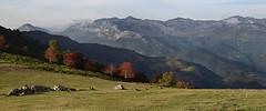 El Aramo (Geli-L) Tags: asturias serval gamoniteiro sierradelaramo teverga quirós villadesub colladadevosbrigue
