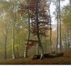romanian wood - Copy (ochils) Tags: outstandingforeignphotographersvisitingromania