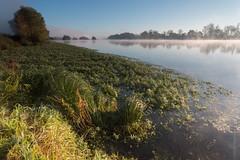 La Loire (olivierbd1) Tags: france centre brouillard brune valdeloire laloire chouzysurcisse