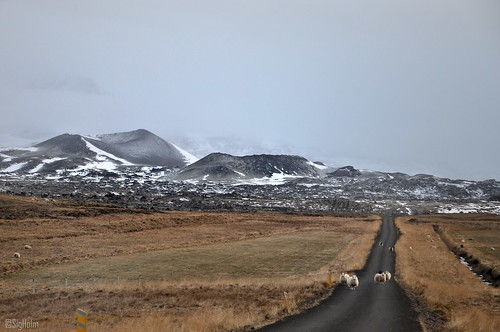 It´s Snowing;  Can We Come Home Now? - Snæfellsnes - Close to Bjarnarhöfn - #14- EXPLORE -2012-11-12