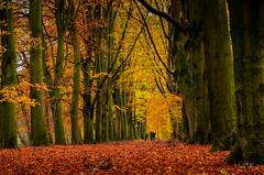 Autumn in Holland (Lefers.) Tags: autumn trees nature leaves gold bomen nikon herfst natuur sion deventer goud abdij bladeren diepenveen d7000