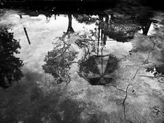 水に映った影 (Syouri Rin) Tags: fujifilm x20