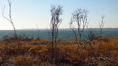 (mahler9) Tags: ocean trees tree lumix december panasonic rhodeisland newport seashore jaym 2013 sachuestpointwildliferefuge dmcfz70 mahler9