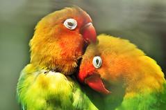 love (the-father) Tags: birds blinkagain bestofblinkwinners blinksuperstars