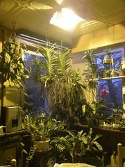 Beleuchtung (UchtenUwe) Tags: licht hell indoor dunkel beleuchtung innenbeleuchtung winterbeleuchtung zusatzbeleuchtung blhtenlicht wuchslicht pflanzenlicht