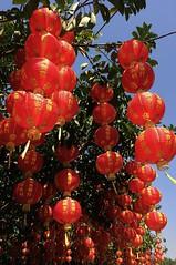 Chinese Lantern Festival, 2014 (A China) Tags: china sun festival chinese chinesenewyear lanterns chinadigitaltimes shenzhen lantern lanternfestival