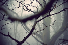 Something Wicked (Kan3mochi) Tags: trees mist nature fog bristol landscape woods branches mendips coomb eastharptree