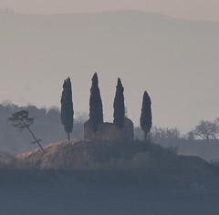 Four cypresses (hbothmann) Tags: cypress zypresse cretesenesi toskana tuscany toscana morgenlicht morgennebel morgenstimmung sunrise myst sonnenaufgang brilliant