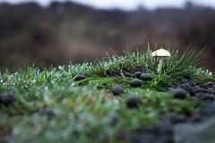 Mushroom on Higger Tor - Peak District (daftnortherner) Tags: mushroom higger tor nature hiking peak district