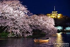 Sakura at Night (kota-G) Tags: cherryblossoms night japan yokohama 三渓園 sakura 桜 夜桜 yozakura nikon scenery landscape spring flower 横浜