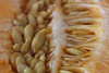 365 - Image 107 - Cantaloupe seeds... (Gary Neville) Tags: 365 365images photoaday 2017 sonycybershotrx100 sony sonycybershotrx100v rx100 rx100v v mk5 raynox macro macromondays seeds garyneville