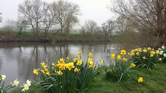 Misty Spring Morn  - River Wye (jeannie debs) Tags: river riverwye water trees flowers riverbank daffodils springtime misty morn morning mist