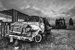 Bedford (angus clyne) Tags: bedford truck decay rust ruin wreck fixeruper goer field farm east cape nz new zealand dry grass