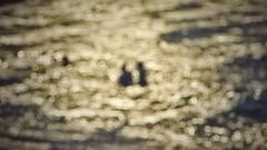 One (Mister Blur) Tags: one couple golden sea bokeh dots happy anniversary sisal yucatán méxico nikon d7100 snapseed hooverphonic