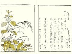White dead-nettle and wild oat (Japanese Flower and Bird Art) Tags: flower lamiaceae wild oat avena fatua poaceae ryusui katsuma ukiyo woodblock picture book japan japanese art readercollection white deadnettle lamium album