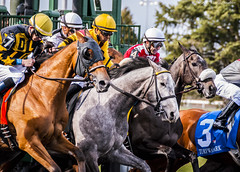 And They're Off (Casey Laughter) Tags: racehorse turfway thoroughbred horse horseracing horses winner loser fun racing racetrack race track saddlecloth tack gate taa