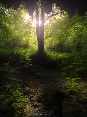 Contraluceando (diegogm.es) Tags: gijon paisaje olympus omd em1 asturias hdr contraluz backlighting arbol tree bosque forest omdrevolution