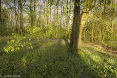 Bluebells Portglenone (RattySV) Tags: nikon nikond7200 sigma1020mmf456 lee09softndgrad leelandscapepolariser bluebells portglenone forest flowers trees coantrim countyantrim northernireland