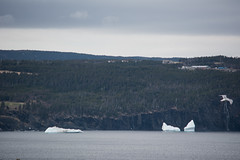 Lost Bergs (Clif Budden) Tags: 2017 april canada cold ice iceberg nl nature newfoundland outdoors saturday