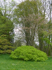 An Afternoon at Thorp Perrow Arboretum (FloraandFauna_2) Tags: thorp perrow arboretum bedale north yorkshire