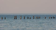 Singularity (Keith Midson) Tags: cormorant bird resting pier bridport birdport jetty ocean sea water sunset sky still calm canon 1dmarkiii 400mm 400mml horizon tag flickr posts photo photograph coast coastline seascape coastal tasmania australia
