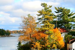 Autumn Foliage at Jones Creek III (barbarasimpson_photography) Tags: 1000islands stlawrenceriver jonescreek autum weekend foliage bluesky sunset pretty environment ontario canada sumac dusk trees maples colour red orange white green purple lavender water majestic